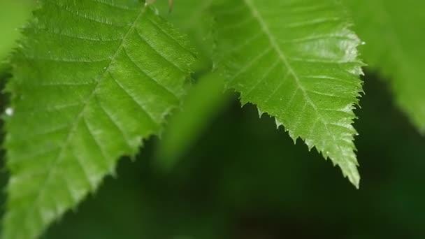 Zelené listy close-up slunce. Pozadí