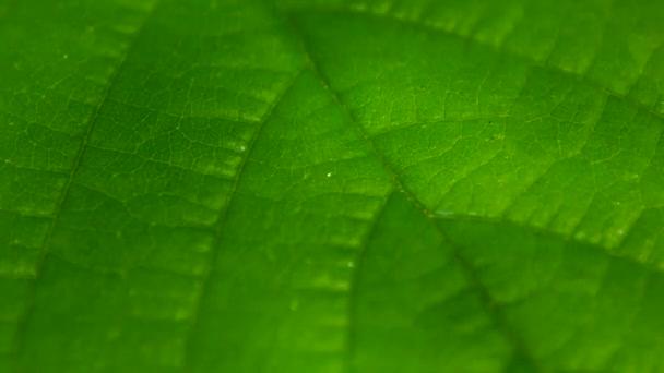 Zöld levél felülete közelről