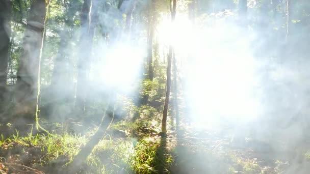 Mlhavé slunečné ráno v lese