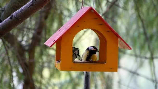 Uccelli che mangiano da mangiatoie per uccelli sullalbero