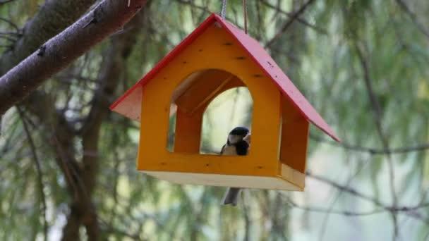 Madarak, madár etetők a fán-ból eszik