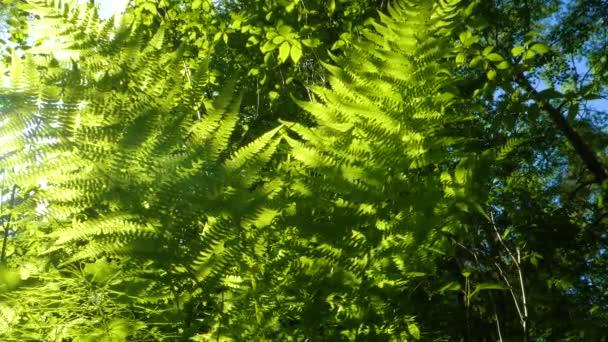 Fern se blíží za jasného slunečného dne