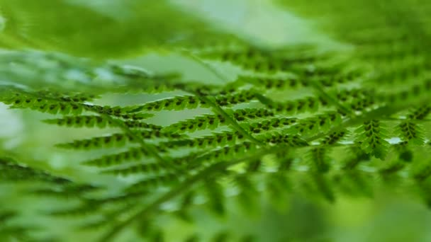 Fern close up on a bright Sunny day
