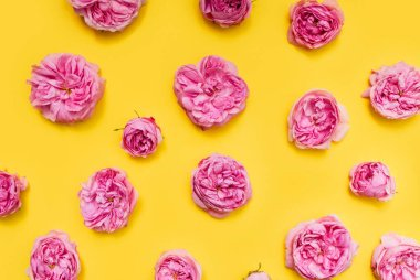 Buds of pink roses on a yellow background. The texture of the flowers. Postcard template. Festive background.