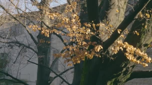 Fák ősszel őszén sárga levelek. Zöld moha a törzsön, fák a középkori parkban. Közelkép lövés. Bergamo, Olaszország