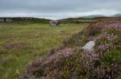 Eine antike mythische Konfiguration aus drei großen Steinen mit antiken Schnitzereien auf Craigmaddie Muir, Schottland. Zweck der Steine ist noch unbekannt