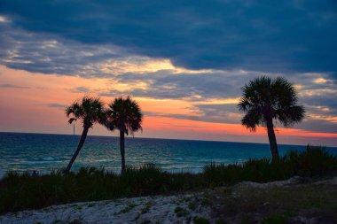 Beautiful Palm Tree Sunset Silhouette in Panama City Beach, Flor