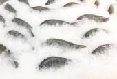 Értékesítésre kész fagyasztott hal