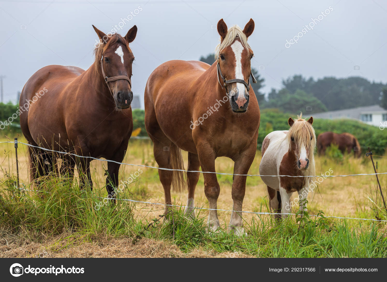 Family Of Tree Horses Stock Photo C Fernandorojano 292317566