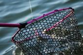 Pisztráng horgászat a tavon