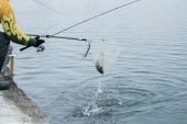 Pisztránghalászat a tavon. Halászati szabadidő