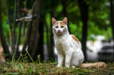 Two-colored cat in a green garden is turned back and washed