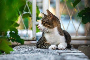 """Картина, постер, плакат, фотообои """"европейская кошка в старом городе, черногория, отдых и туризм, домашние животные. постеры картины бабочки"""", артикул 409233882"""