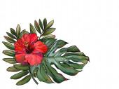 trópusokon, trópusi növényekben, pálmalevelek, illusztráció, paradicsomvirág fehér alapon, a kártyák regisztrációja, a nyomtatott anyag, esküvők. kézzel
