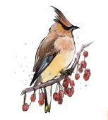 Jay madár ült a fa ága piros bogyós fehér alapon