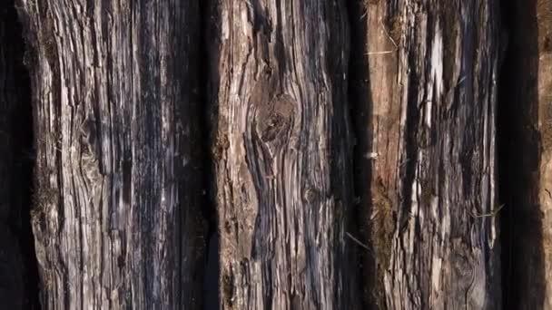 Staré klády ležící balení dřeva textury
