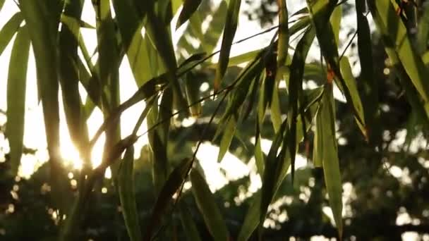 Sunlight flares through green bamboo leaves