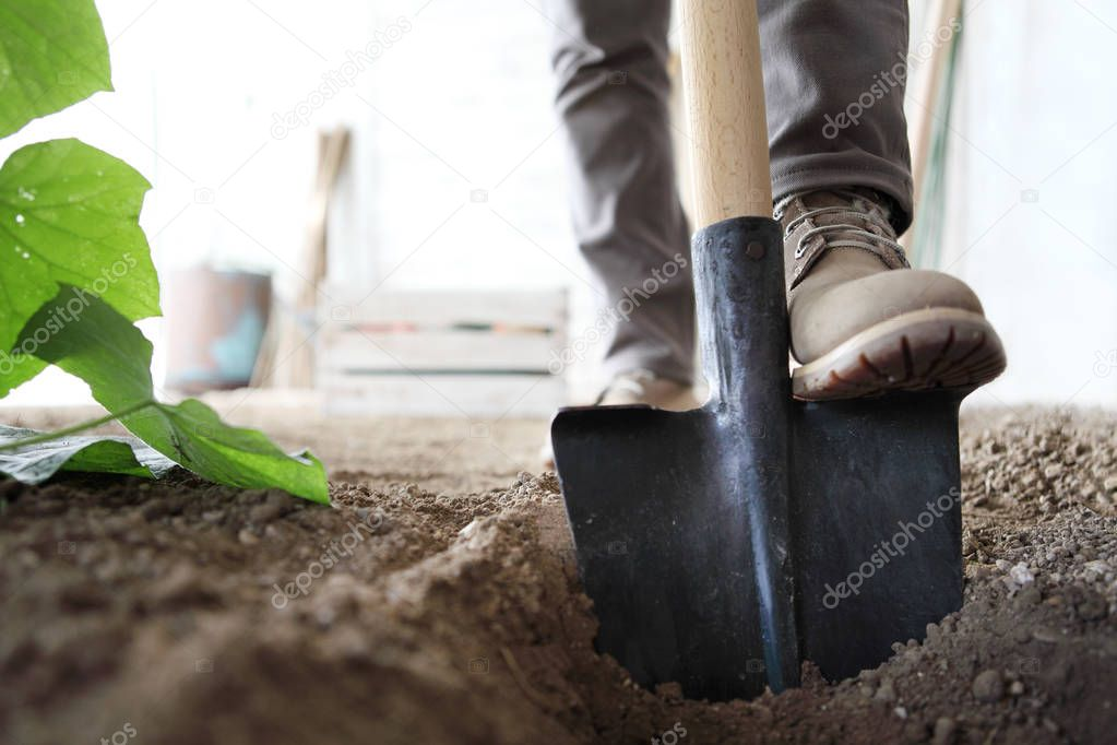 working in vegetable garden, foot spade the soil, close up