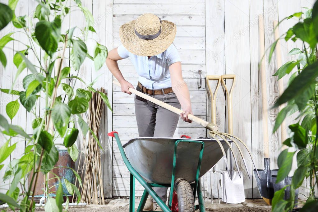 woman work in vegetable garden with wheelbarrow and pitchfork, set of equipment tools on wooden wall background, healthy organic food produce concept