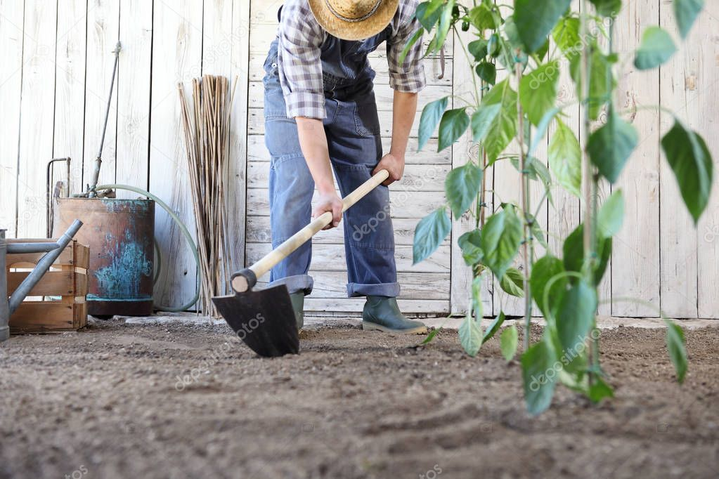 man working in the vegetable garden, hoe the ground near green plants