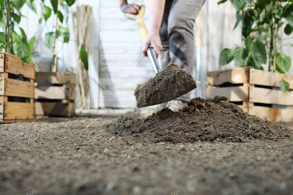 woman plant in the vegetable garden, work by digging spring soil