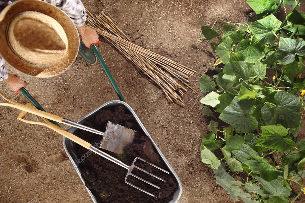 man farmer working in vegetable garden, wheelbarrow  full of fer