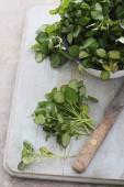 Fényképek vízitorma friss salátával
