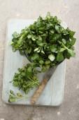 Fényképek friss víz zsázsa salátával