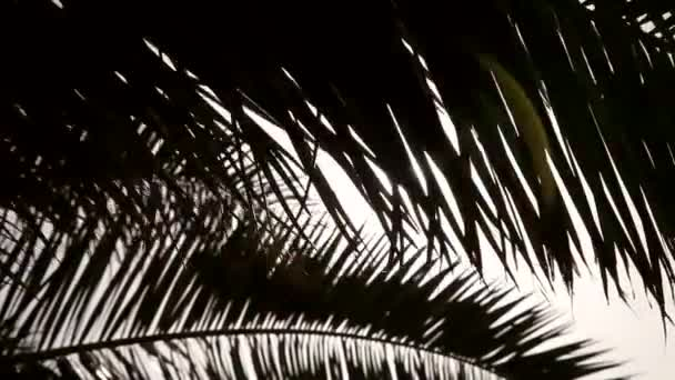 the sun shines through the palm leaf, palm branch