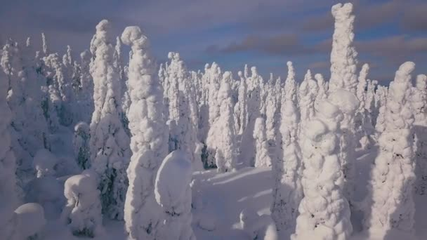 Aerial view of cold winter with lot of snow and blue sky. Winter landscape in Finland Lapland.