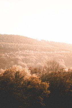 Beautiful shot of brown trees and greenery on hills and mountains in the countryside at sunset