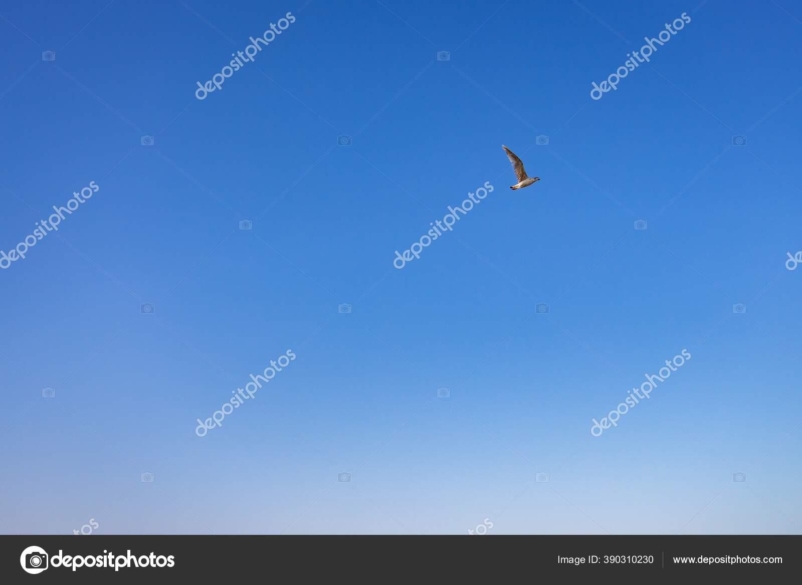 Фишки нет фото птиц в небе