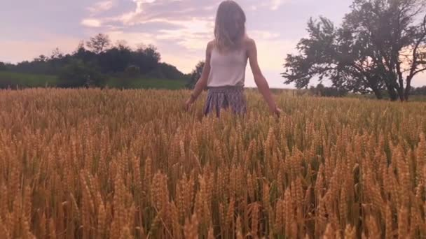 Dívka se těší v zlaté pšenice - pole v létě.