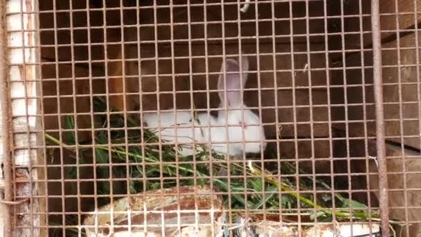 Weißes Kaninchen in einem Käfig, der grünes Gras isst. Kaninchenzucht. Weißes Kaninchen sitzt in einem Käfig und isst Gras auf dem Bauernhof. Kaninchenpflegeführer
