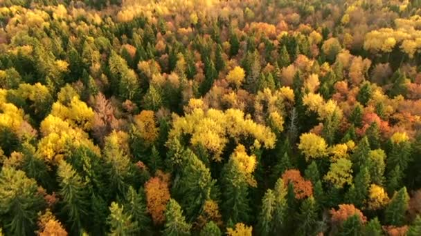 Golden autumn. Flight over autumn forest from altitude on sunny day