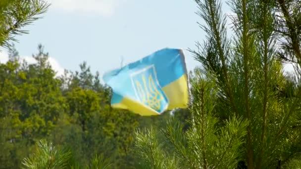 Ukrainische Flagge mit einem Wappen zwischen Kiefern und Tannen. Super Nahaufnahme