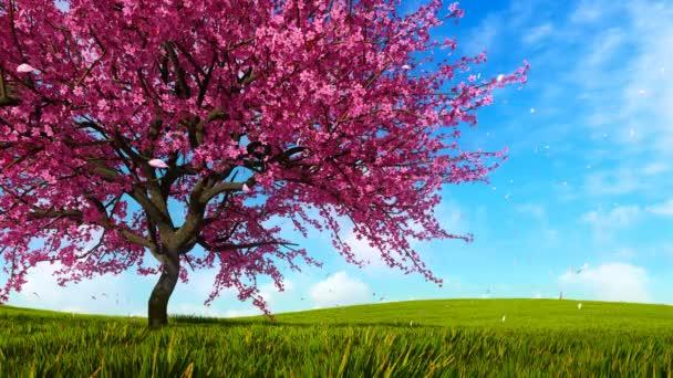 üppig blühender Sakura-Kirschbaum mit rosa Blütenblättern, die in Zeitlupe vor strahlend blauem Himmel und grünem Grasfeld auf dem Hintergrund an sonnigen Frühlingstagen fallen. 3D-Animation in 4k gerendert