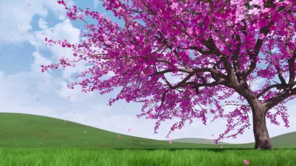 Közeli fel a buja Sakura cseresznyefa teljes virágzás a csökkenő rózsaszín szirmok a hegyek borított friss zöld fű, napos tavaszi napon. Dísz díszítő3d animáció 4k-ban