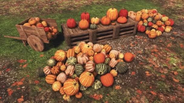 Různé barevné podzimní dýně na prodej na venkovském farmářském trhu na Den díkůvzdání nebo Halloween svátky. Bez lidí slavnostní podzimní sezóna 3d animace vykreslené ve 4k