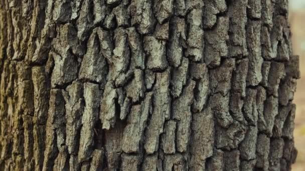 Makro stromu v lesním prostředí krajina texturované detail park tmavá větev slunce grung krásné světlo zblízka zpomalit pohyb