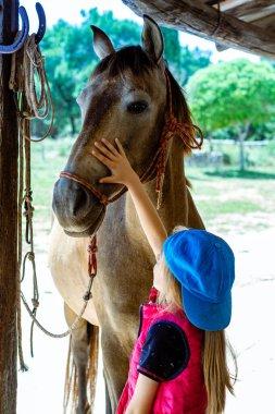 Thoroughbred horses in rural setting