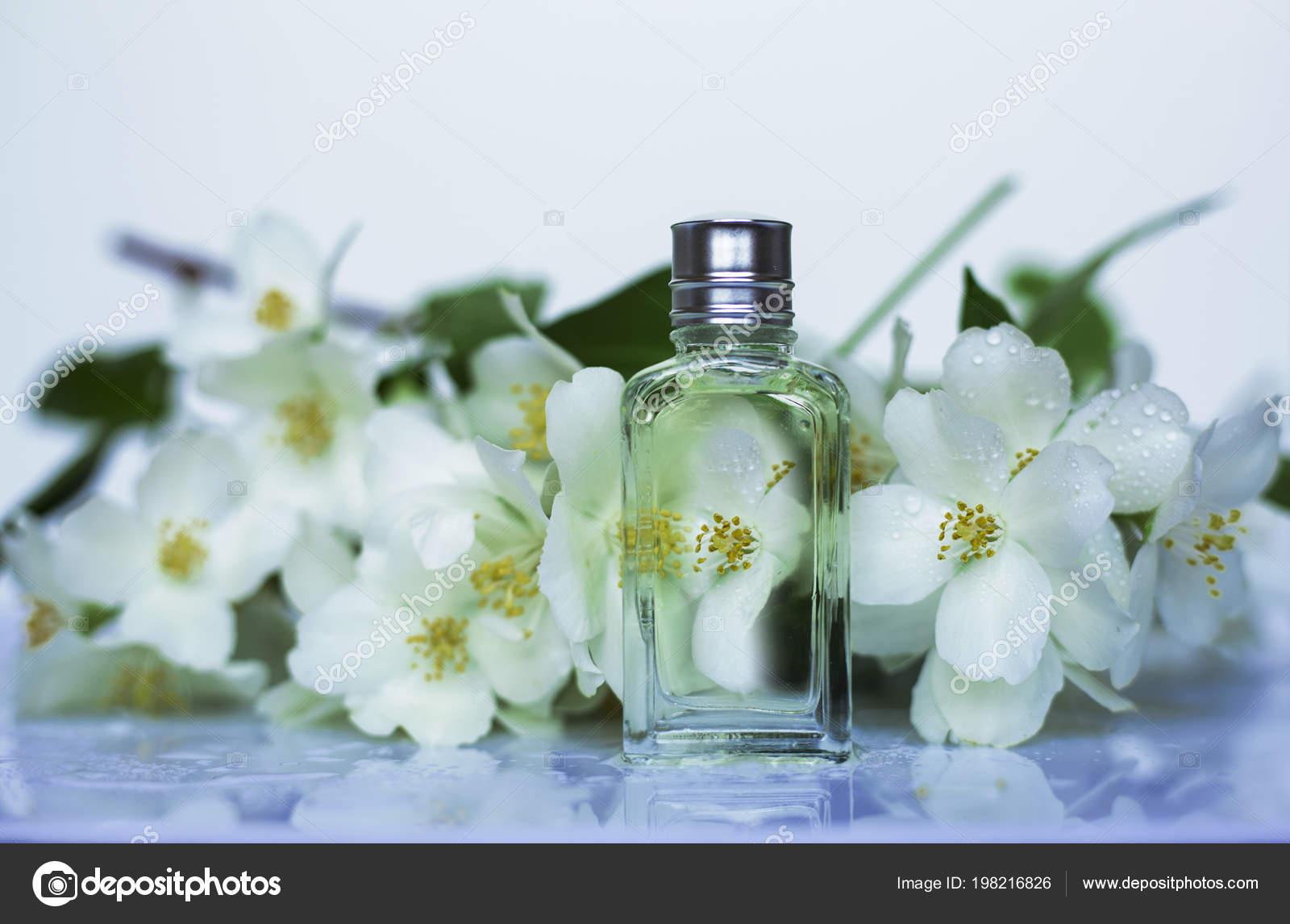 Perfume Jasmine Flowers Stock Photo Image By C Martyna1802 198216826