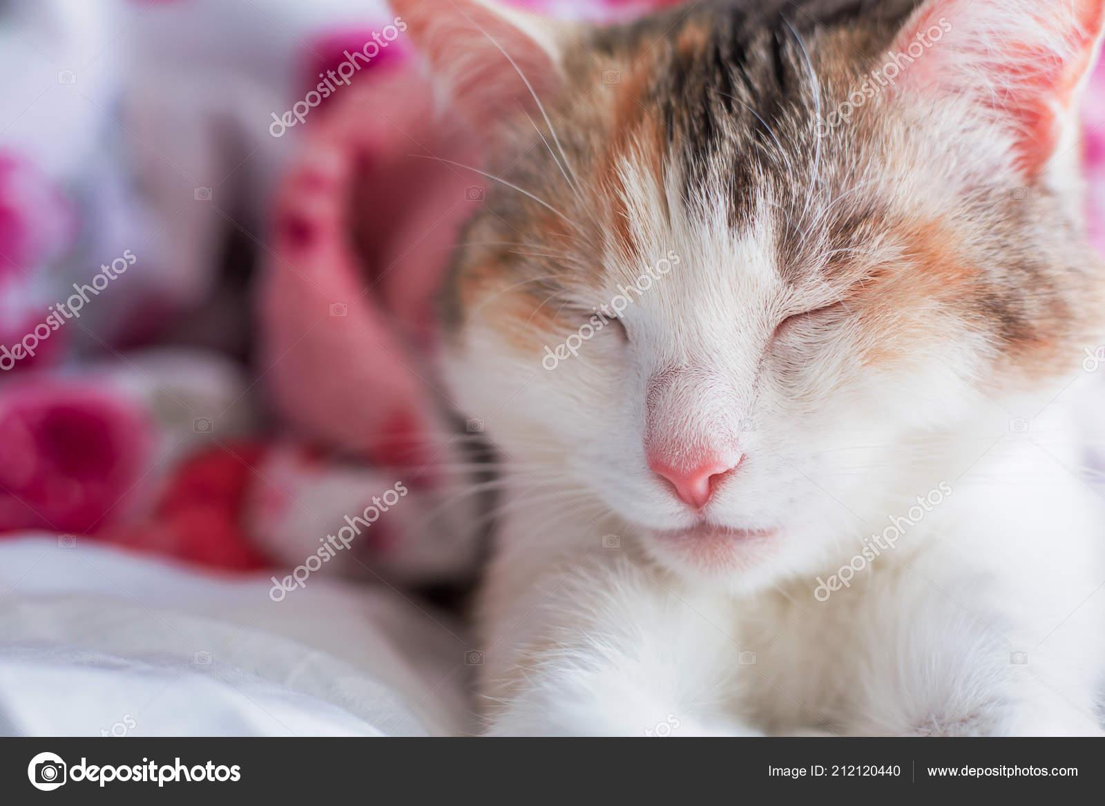pěkné růžové kočička fotkyzdarma ke stažení porno máma a syn
