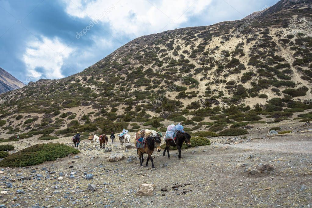 Mountain trail in the Himalayas, Nepal-05.04.2018: a horse Caravan transports various cargo on April 5, 2018 on a mountain trail in the Himalayas , Nepal.