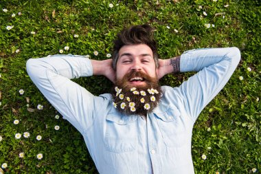 Spring holiday concept. Hipster on happy face lays on grass, top view. Guy looks nicely with daisy or chamomile flowers in beard. Man with beard and mustache enjoys spring, green meadow background. stock vector