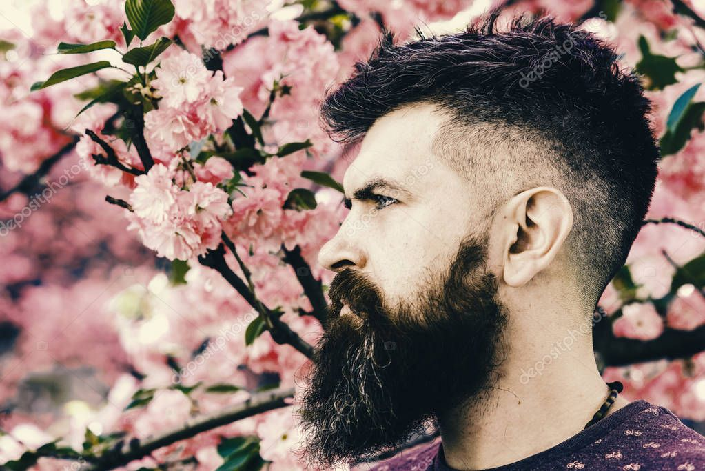 spring flowers. Man with beard and mustache on strict face near pink flowers. Blooming concept. Hipster enjoys spring near sakura blossom.