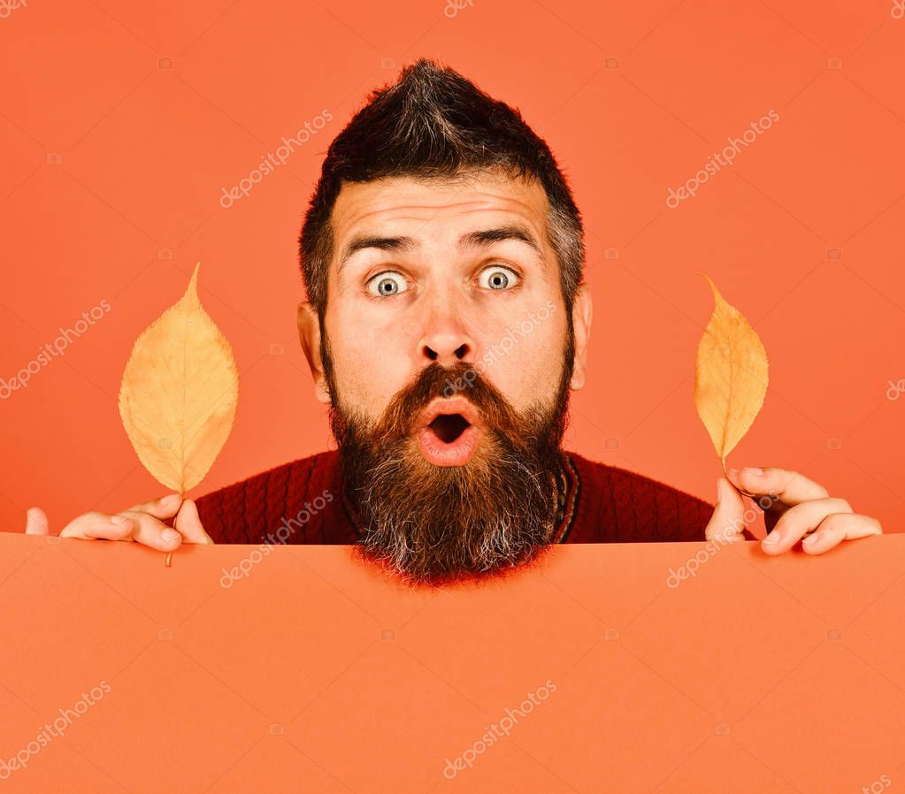 October and November time. Man holds yellow cherry tree leaves