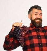 Farmář ukazuje svou úrodu. Vinařství a koncepce podzimních plodin.