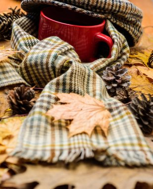 Mug drink and checkered scarf and kepi. Mug of tea covered with hat and surrounded by scarf autumnal background with fallen maple leaves and fir cones. Warming beverage. Hot drink for autumnal walk