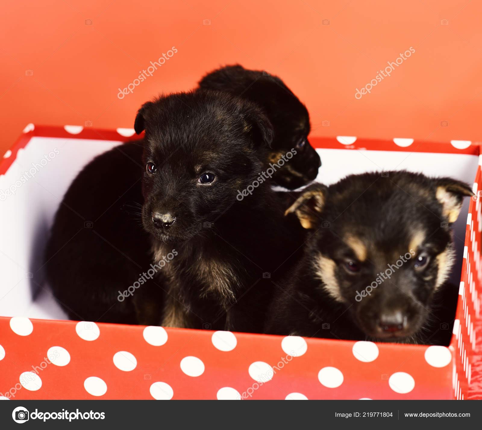Cuccioli In Regalo Animali Di Piccola Taglia Come Regali Di Natale